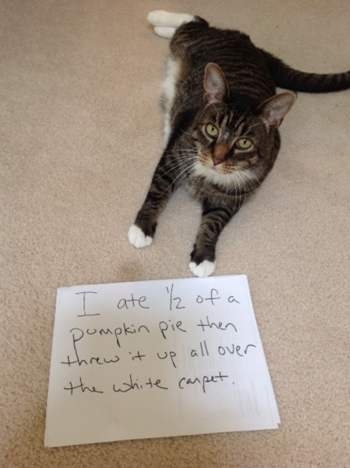 http://mypet.guru/cat-shaming-honesty-day/