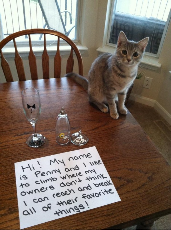 http://likes.com/misc/best-of-cat-shaming