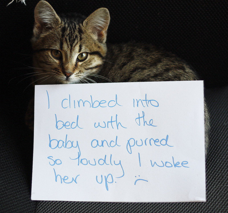 http://somedaywewillsleep.com/today-i-am-cat-shaming/