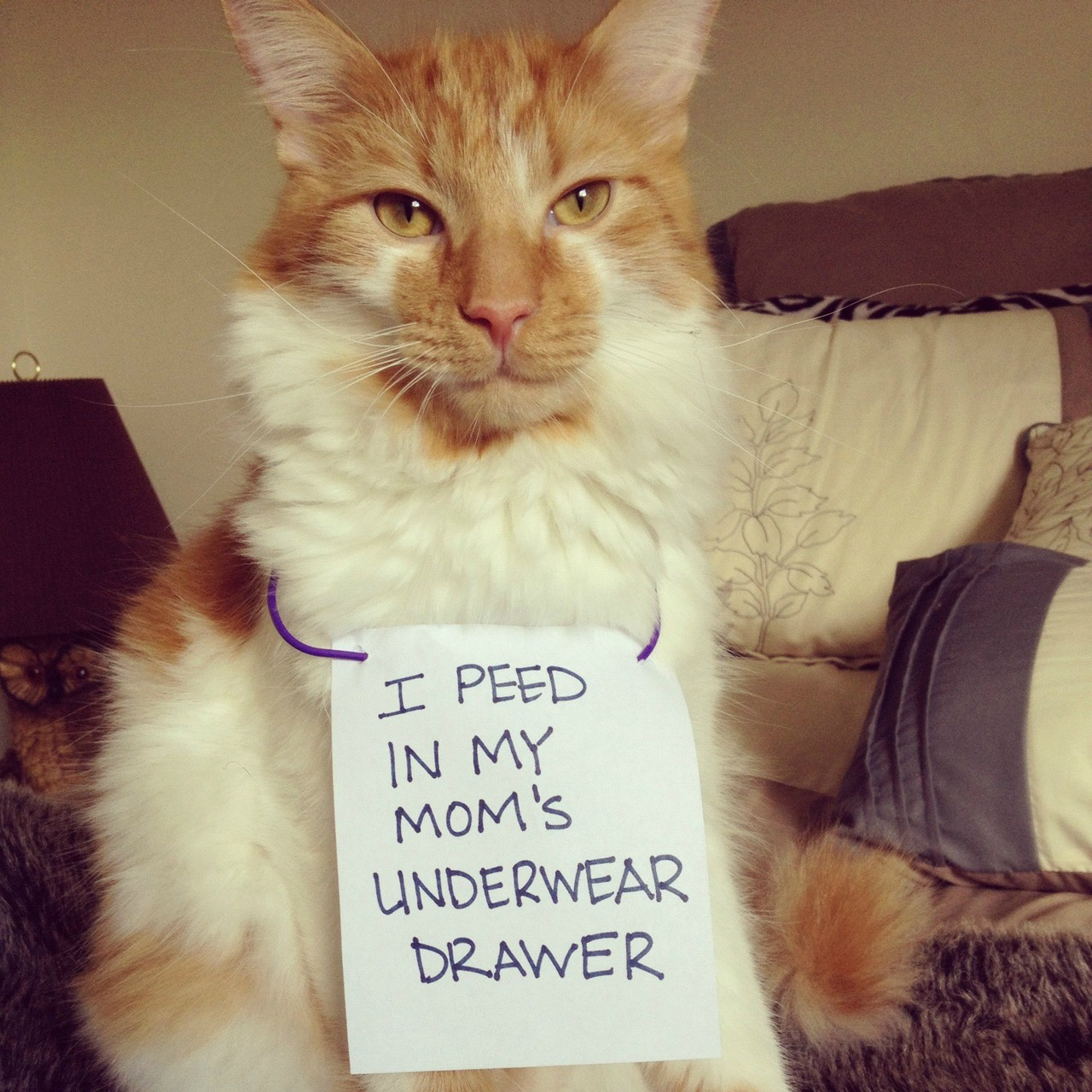 http://www.petshaming.net/mommy-pees-in-them-too/#.U8nZJICSys0