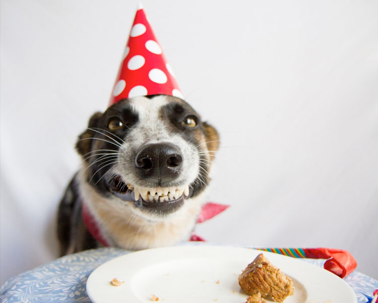 http://www.aplacetolovedogs.com/2014/06/10-of-the-cutest-pictures-of-birthday-dogs-youll-ever-see/1486661334/