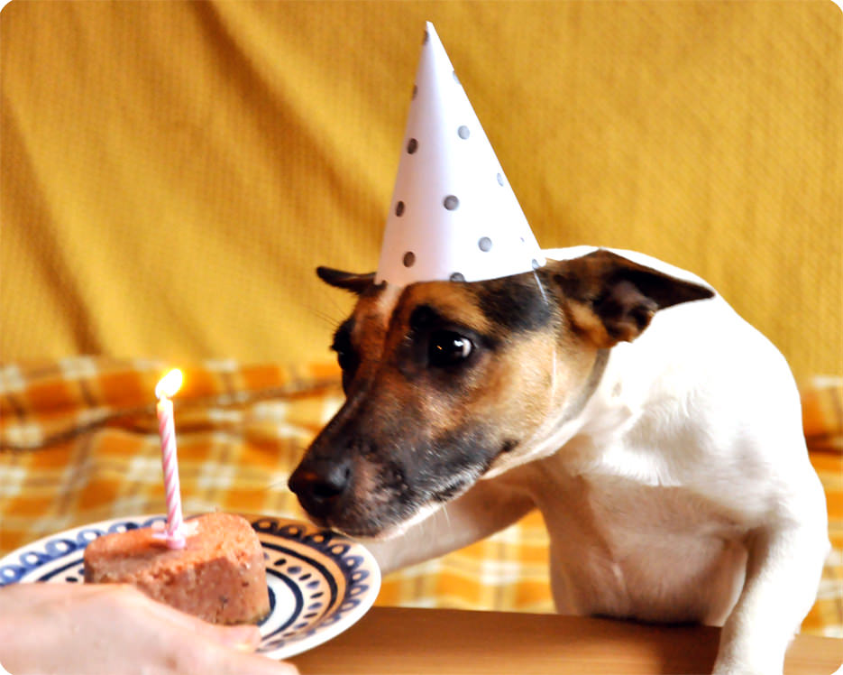 http://memitherainbow.blogspot.com.au/2013/02/happy-birthday-fifi-dog-party-hat.html