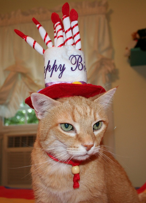 http://tonsofcats.com/its-my-cats-birthday/4/