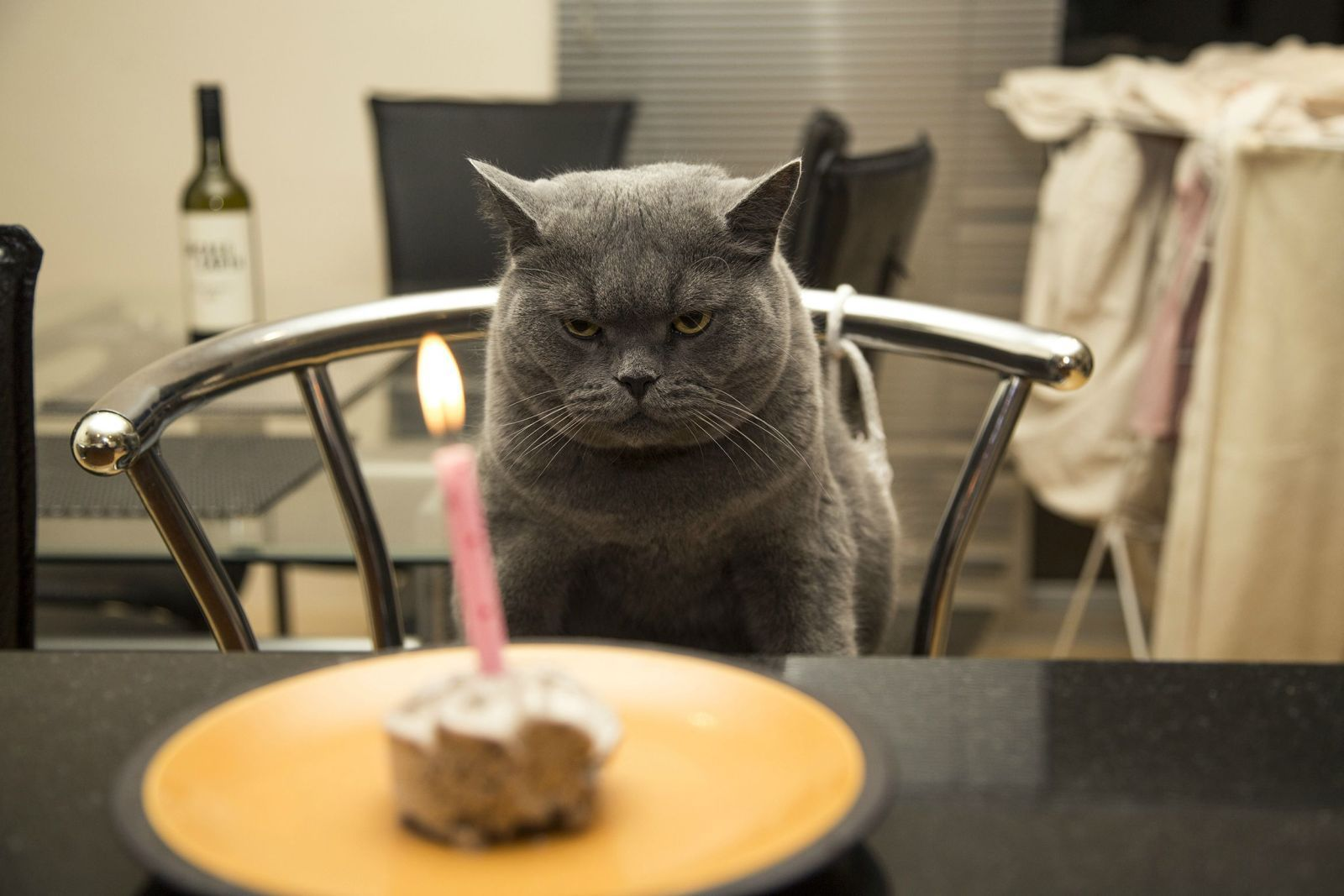 http://www.skunkwire.com/wp-content/uploads/2014/01/happy-birthday-cat.jpg