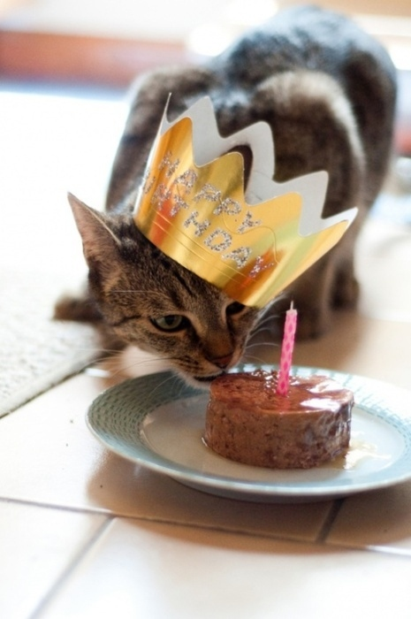 http://cutestcatpics.com/cat-eating-birthday-pate/