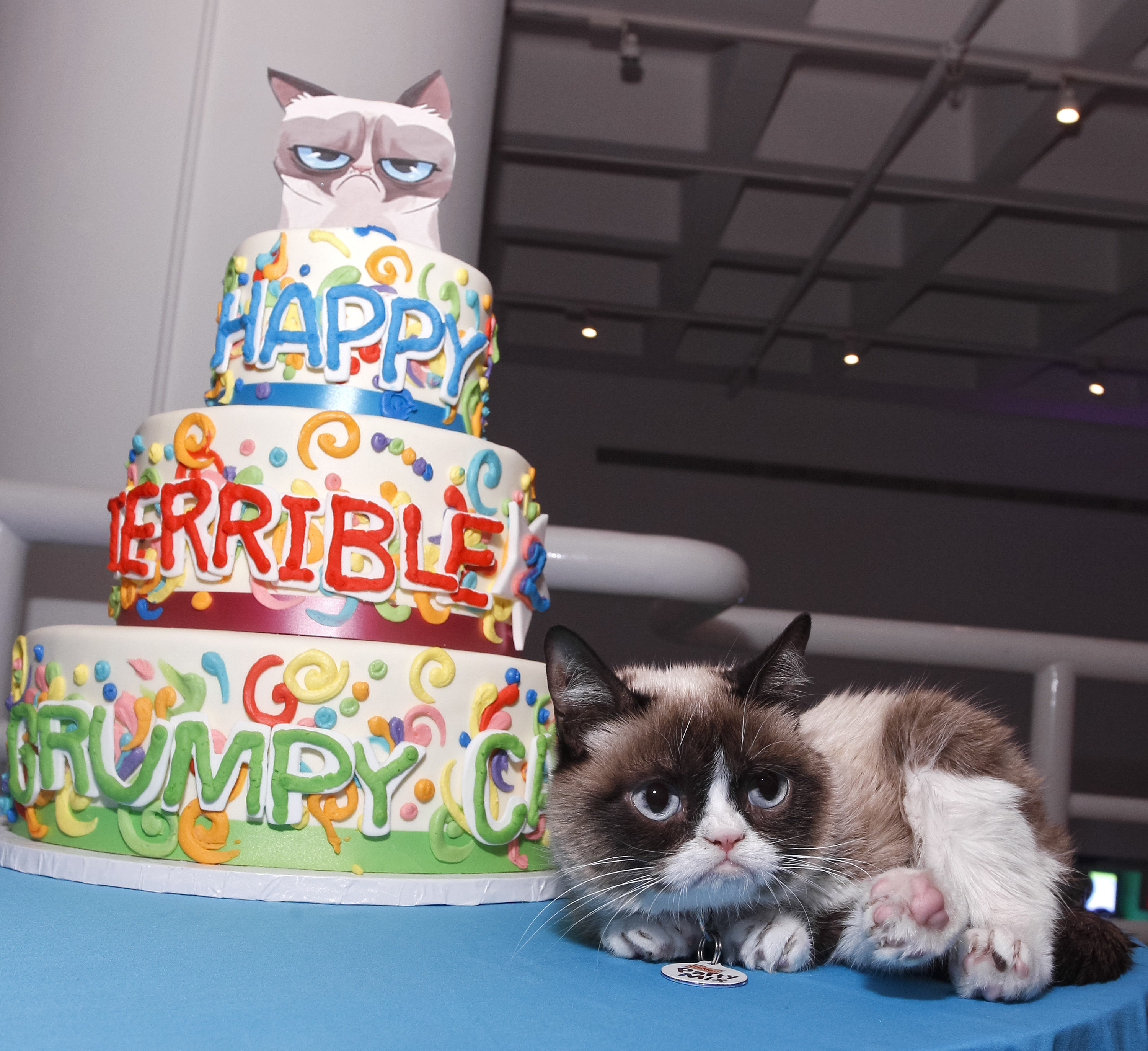 http://www.metro.us/newyork/entertainment/gossip/2014/05/01/grumpy-cat-shares-pearls-wisdom-second-birthday-party/
