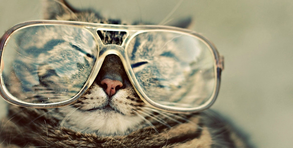 http://www.lostateminor.com/2014/02/24/things-tamed-hipster-nerd-glasses-tamed-cats/