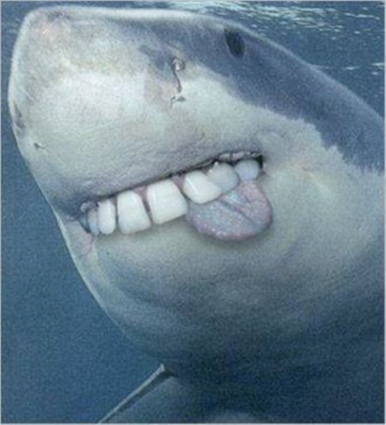 http://www.funcage.com/blog/sharks-with-human-teeth-15-photos/