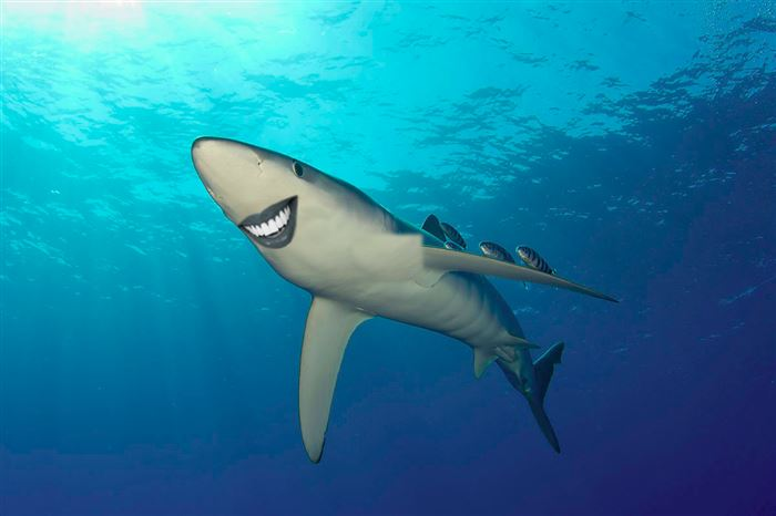 http://diply.com/different-solutions/youve-never-seen-such-friendly-looking-sharks/24897