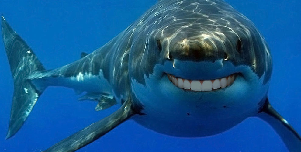 http://www.lostateminor.com/2013/08/02/sharks-with-human-teeth/