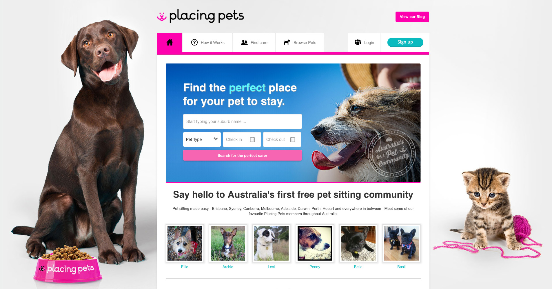 placing pets, dog lovers, brown dog