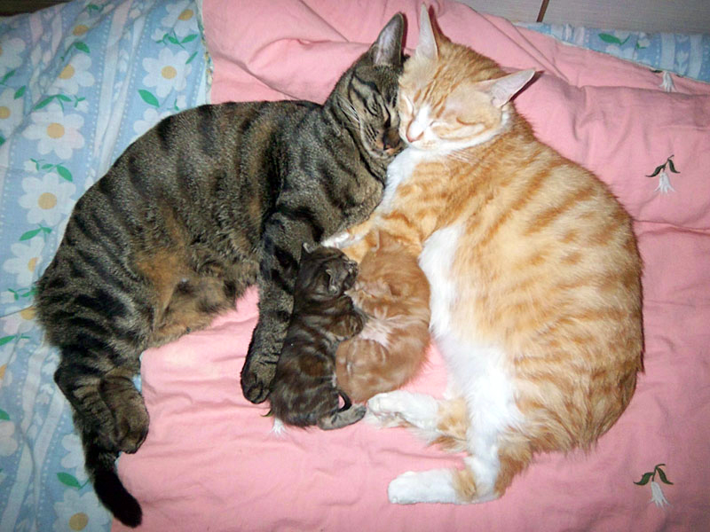 Two cats and two kittens