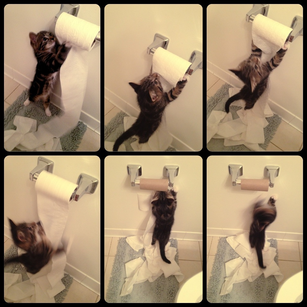 Cat destroying the toilet roll