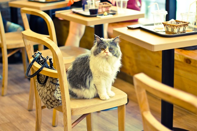 http://cdni.condenast.co.uk/646x430/a_c/cat_cafe_cnt_21feb13_flickr_ceruleansky_b_646x430.jpg