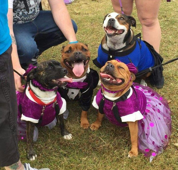 https://www.facebook.com/RSPCAMillionPawsWalk