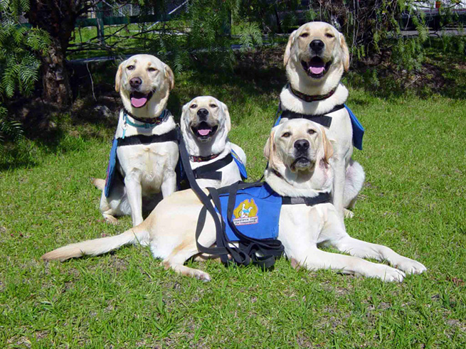 http://www.assistancedogs.org.au