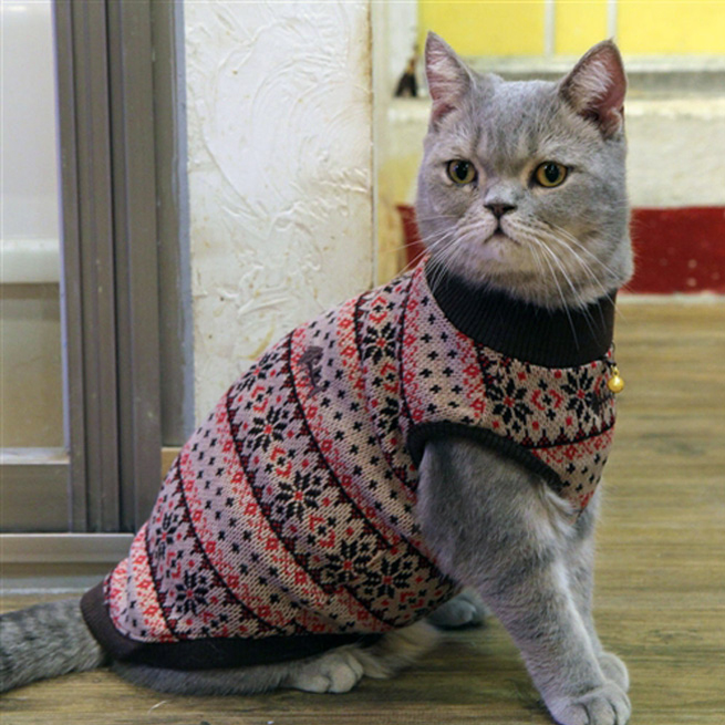 cat jumper | cat fashion