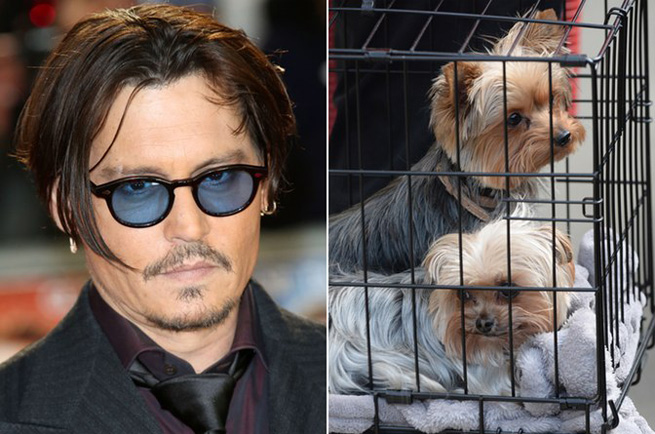 johnny depp and amber heard dog smugglers