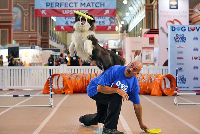 dog jumping guiness world record