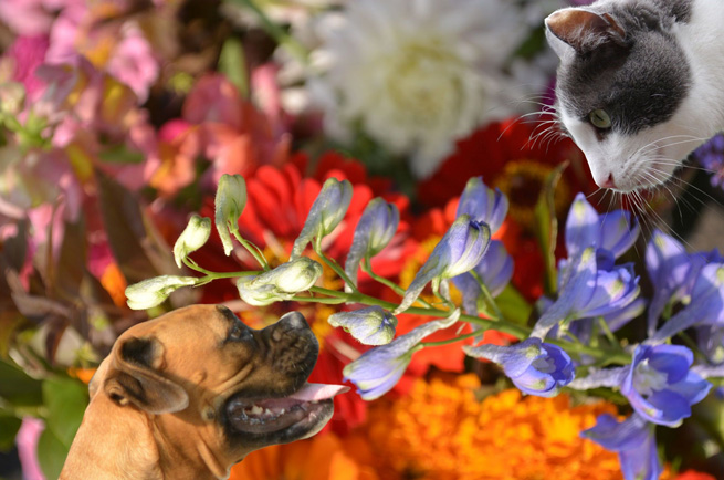 cat and dog sniffing flowers