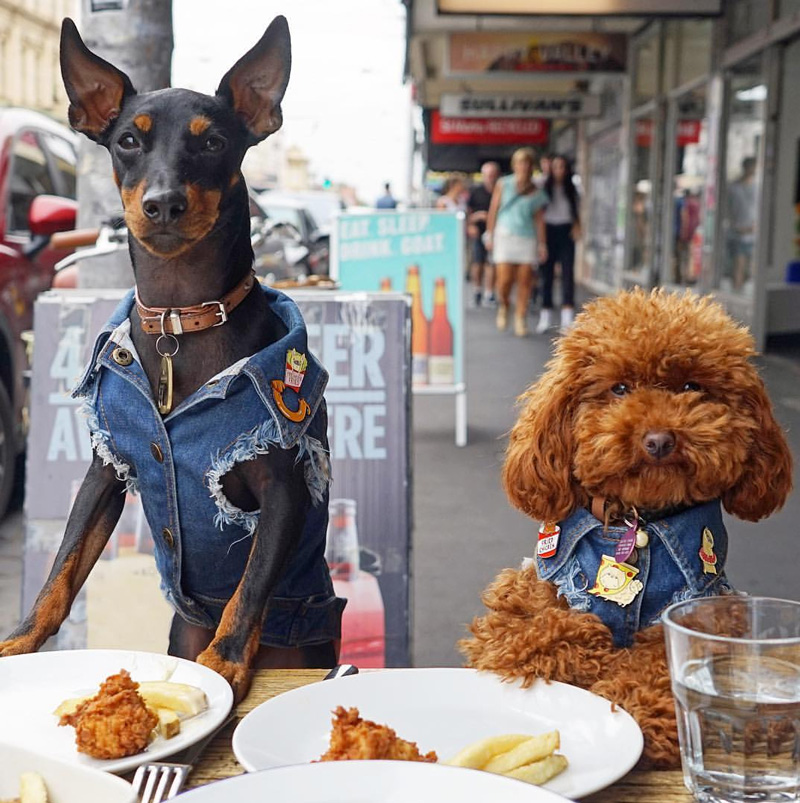 dogs eating out
