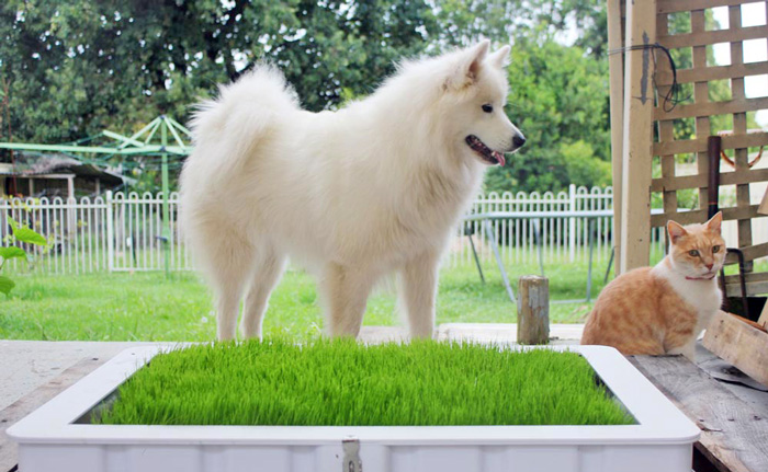 Cat and dog using potty plant