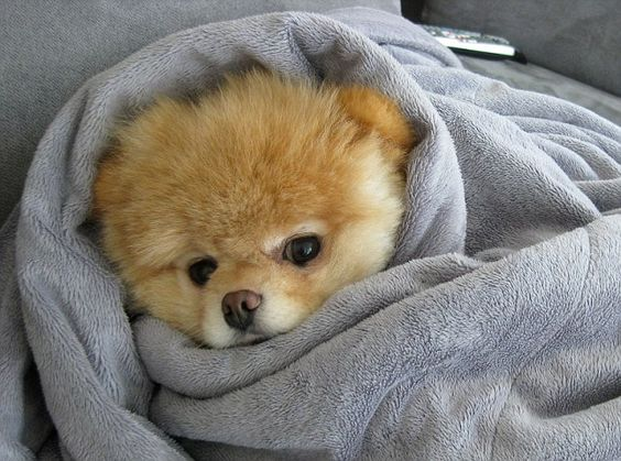 puppy in towel