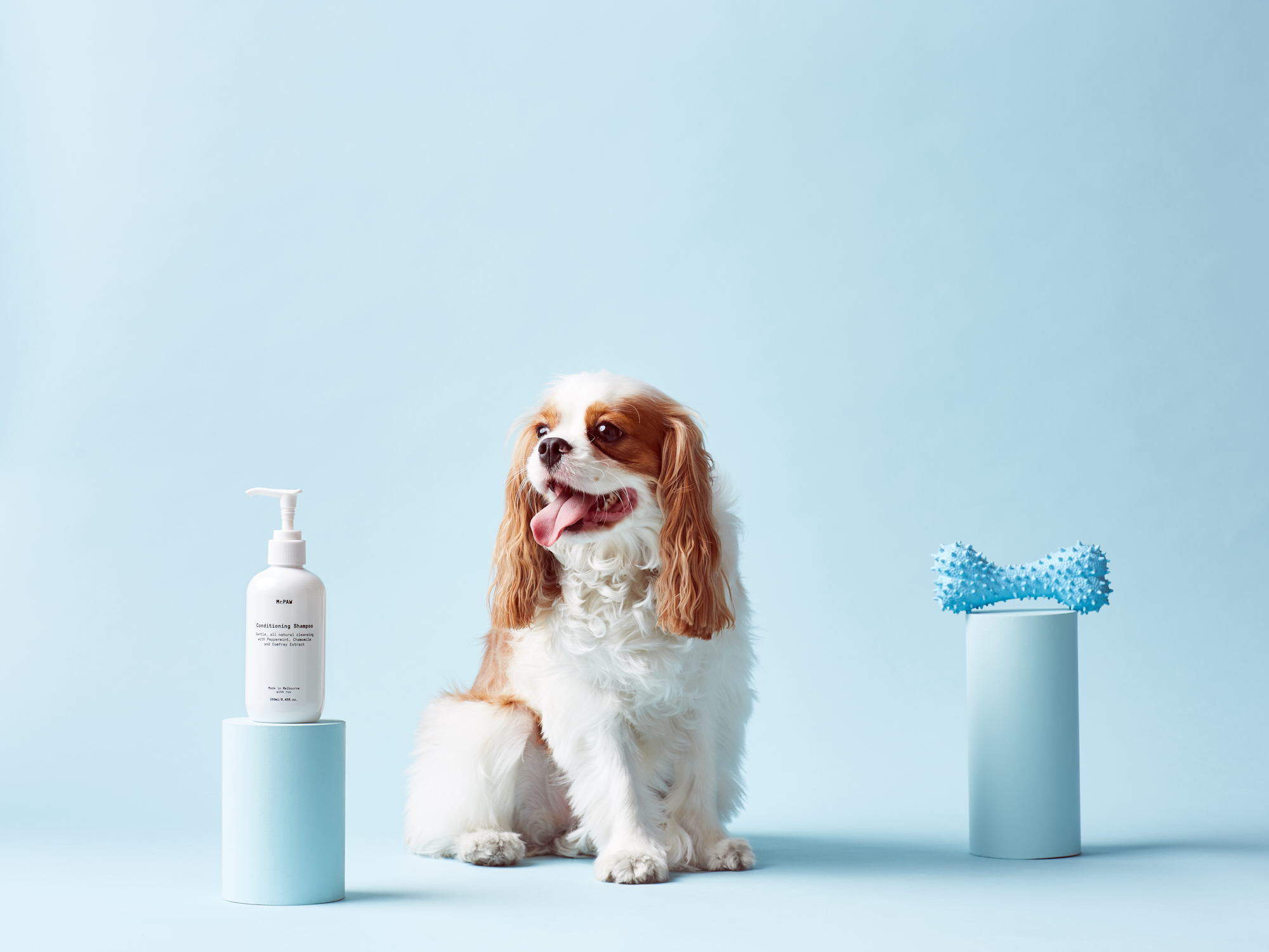 Mr Paw dog shampoo and molly the cavalier king charles