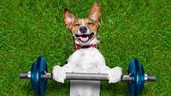 fitness for dogs | dog lifting weights