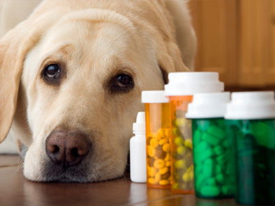 medicine for dogs
