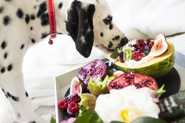 dalmatian eating fruit